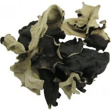 Black Funghi Mushroom