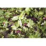 Precut Lettuce (19)